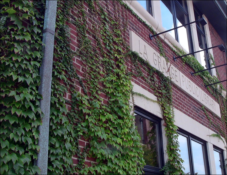 La grange library ivy